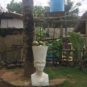 Head full of coconuts