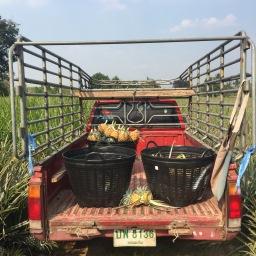 The Pineapple Farm In Ratchaburi